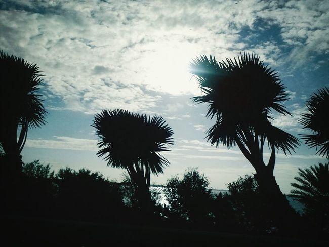 Enjoying the beautiful weather!!! Relaxing Enjoying Life Taking Photos Beautiful Skies