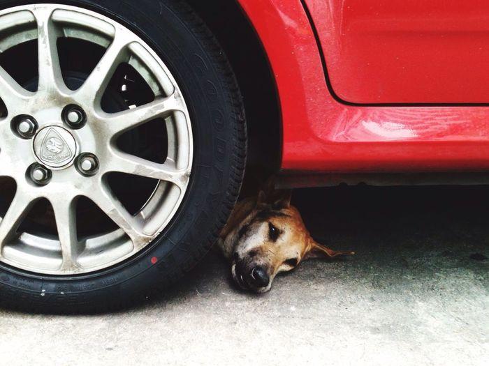 Hidden dog The Street Photographer - 2016 EyeEm Awards Thai Street Dog Thai Brown Dog Sleepy Under The Red Car Car Park On Ground Rama 9 Bangkok Office Building