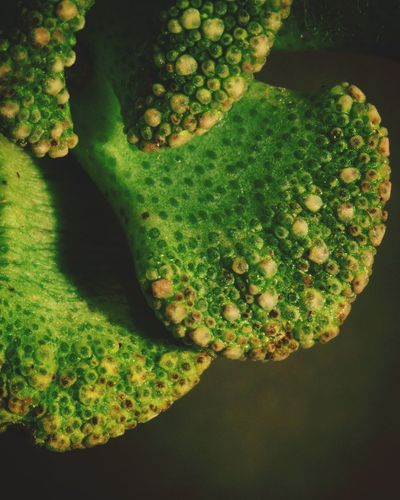 Succulents, Cacti, Flowers, Cicek, Plants, Agaclar, Macros,#closeups, Photos, Photographers, Photography, Like4like, Likeforlike, Canon,  7d, Wonderful,#amazing, Awesome, Followme, Shot, Shots, Art, Arts Succulents Cacti Succulent Cactus Collection Closeupshots Macro Photography Macro_collection Picoftheday Makro Close Up Photography SucculentsLover Close-up Plant Green Color Cactus Succulent Plant