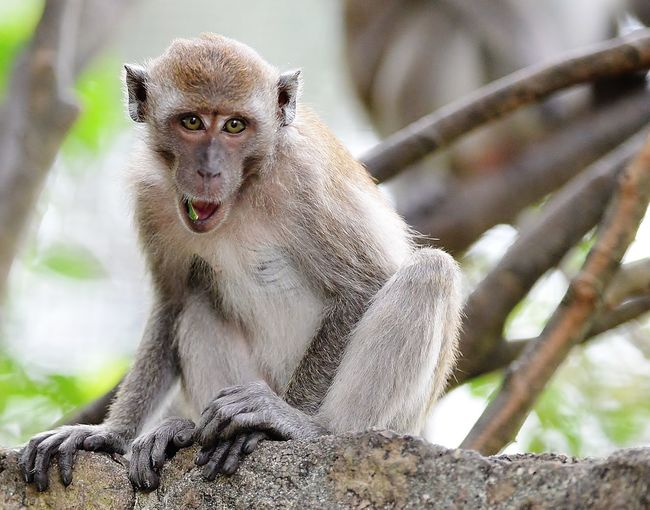portrait of monkey looking at camera