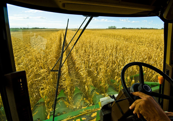 Ride Along Agriculture Autumn Combine Harvester Driver EyeEmNewHere Farm Farmer Field Fuel Global Warming South Dakota Climate Change Combine Corn Crop  Energy Ethanol Farming Food Grain Harvest Rural Scene Windshield