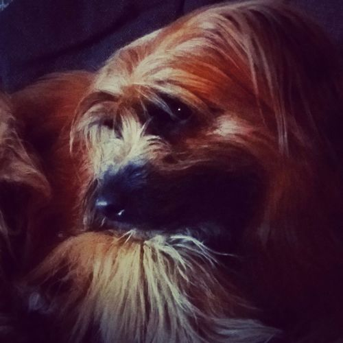 Nice dog #dog