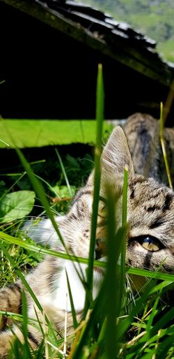 Close-up of a cat on grass