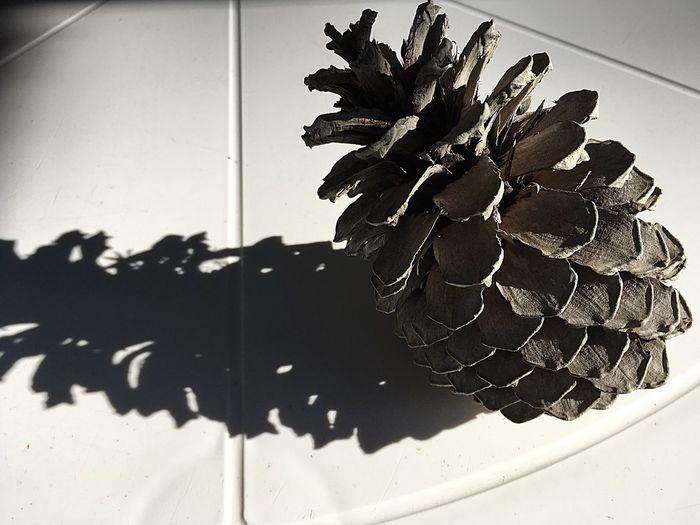 Pomme ...de pin..ombre