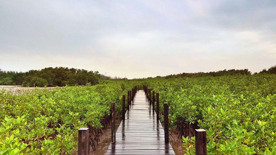 Boardwalk amidst plants growing on field against cloudy sky