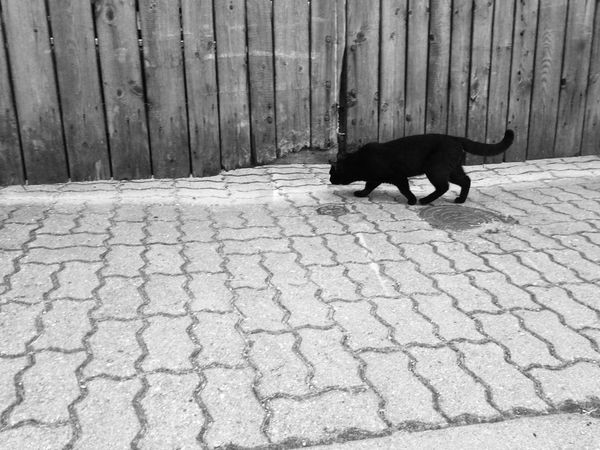Nosy cat. Throwback --> Ventspils and hot summer days One Animal No People Outdoors Day Summer Pets Domestic Animals Blackandwhite Monochrome Nature Cat BLackCat Black Cat Photography