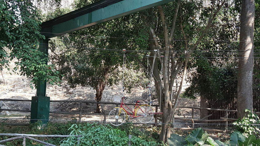 Hanging Bicycle Architecture Beauty In Nature Bicycle Bridge - Man Made Structure Chaingmaizoo Chiangmai,Thailand Cycling Cycling Around Day Grass Growth Nature No People Outdoors Plant Steel Structure  Tree Water Be. Ready.