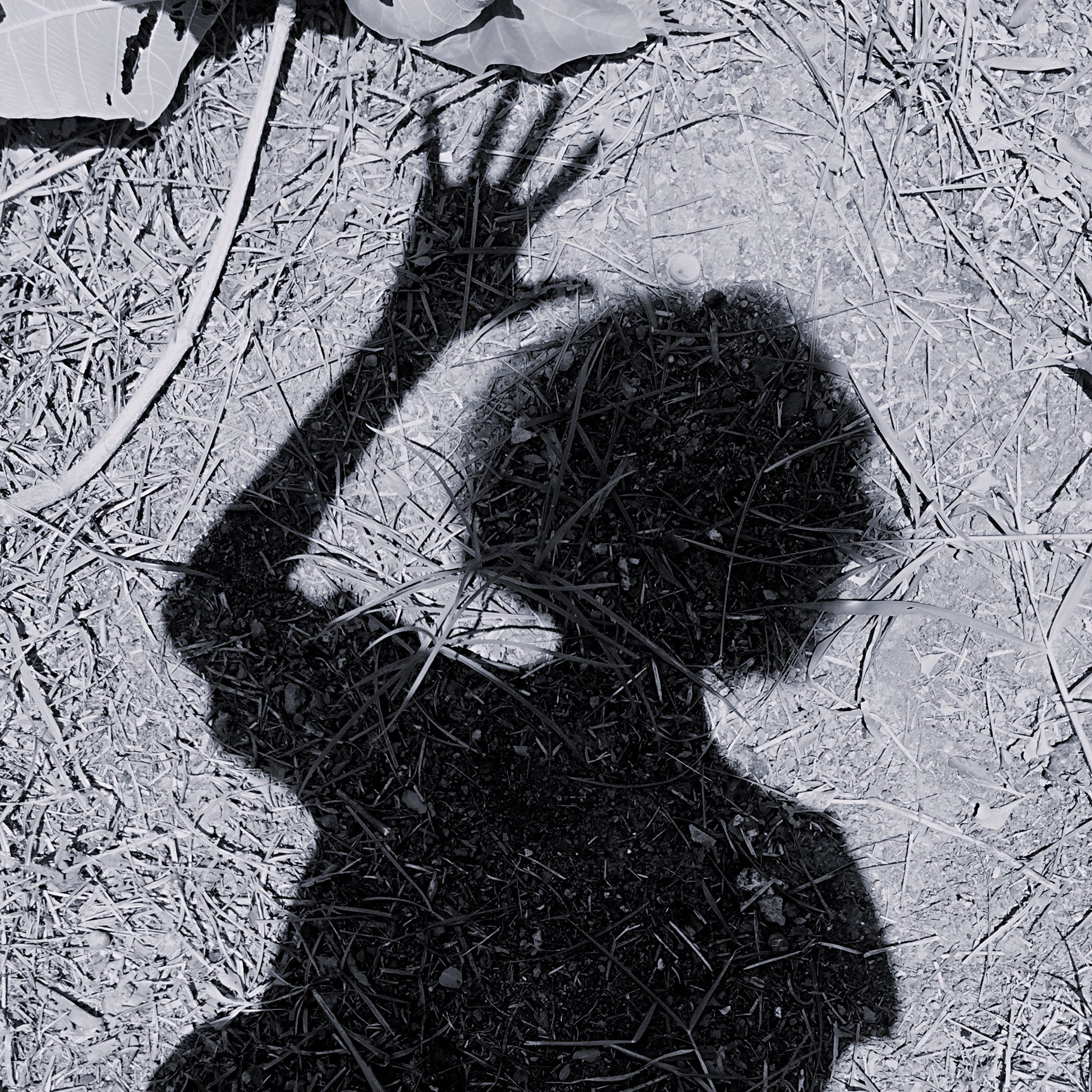 shadow, day, one person, outdoors, nature, sunlight, real people, women, lifestyles, tree, close-up, people