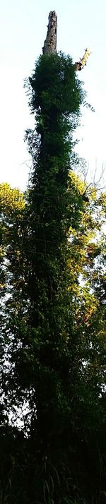 Weird Vine Coverd Trees Taking Photos Check This Out Hanging Out