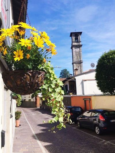 Sunny Italy Built Structure Outdoors Architecture Flower Sky No People Street Photography Blossom Sunny Day