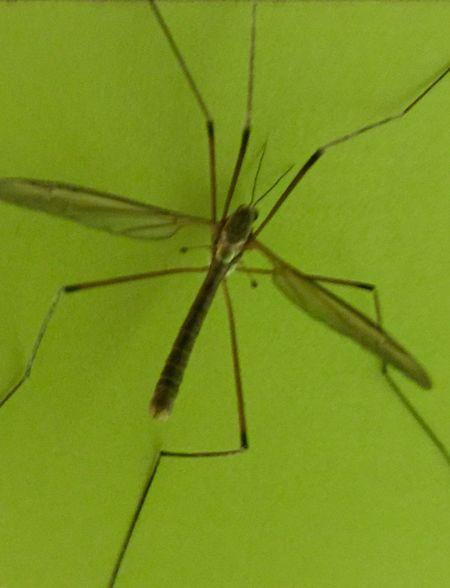Nature Mücke Mücken