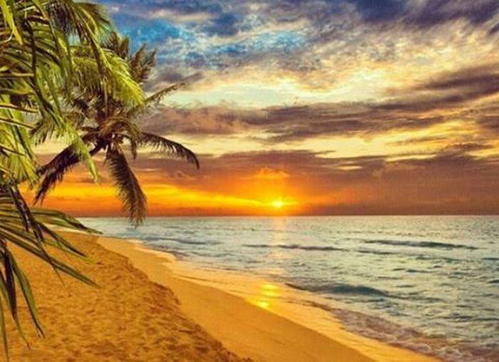 Tahiti Trueparadise Goldensun Bluesky Carefree Palmtreesandparadise Cosinusphoto