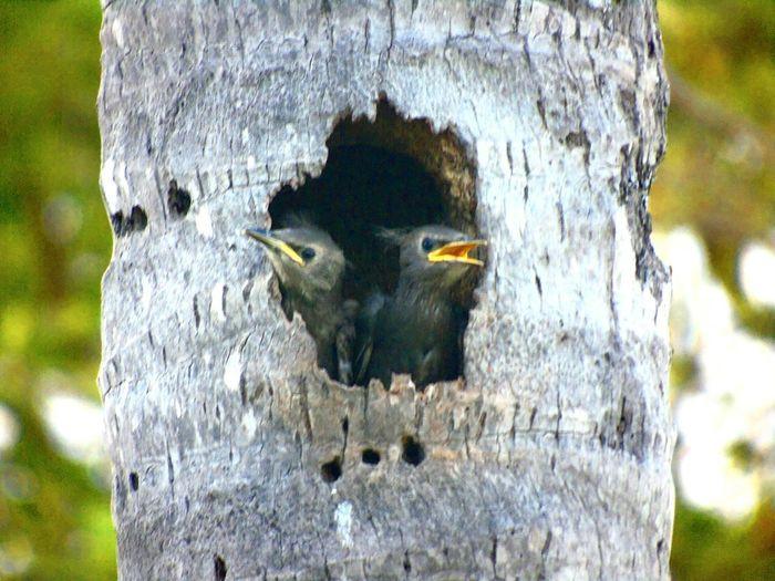 Birds Natures