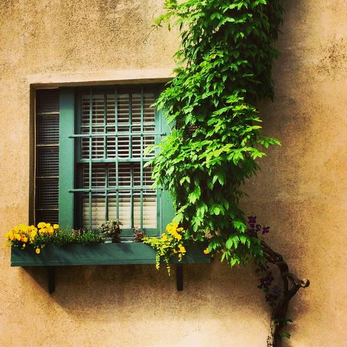 West Village, NYC windowbox Day Flower Flower Pot Green Green Color Growing Leaf No People Potted Plant Texture Window Window Box