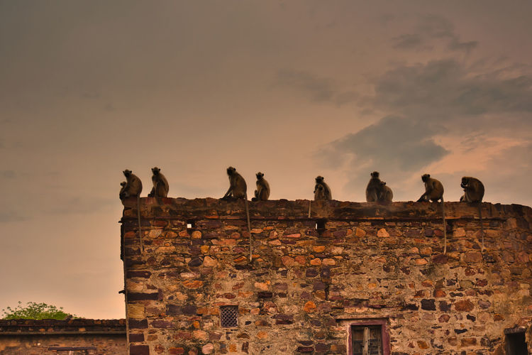 Low angle view of monkeys on wall against sky
