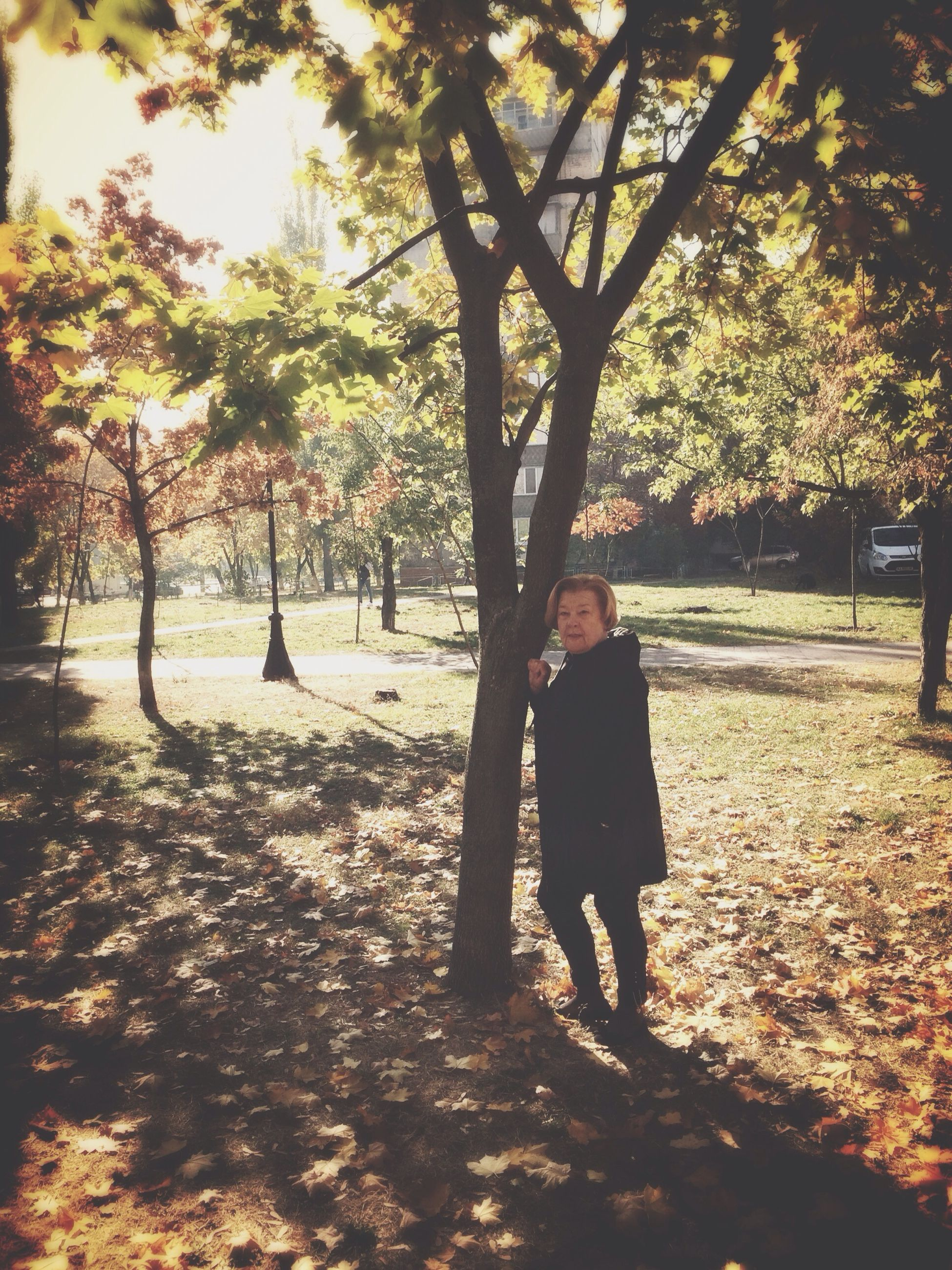 tree, autumn, lifestyles, change, leisure activity, season, walking, rear view, full length, leaf, park - man made space, person, standing, tree trunk, nature, sunlight, casual clothing, growth