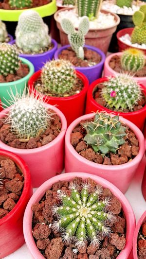 Close-up of plants at market stall