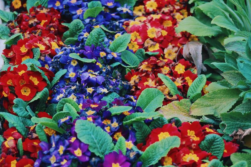 Spring colors flowers 💐 bright colors beautiful colors flower 🌸 Growth Beauty In Nature Plant Part Full Frame Plant Multi Colored Leaf No People Freshness Vulnerability  Backgrounds Nature Green Color Flower Day Flowering Plant Fragility Close-up Flower Head High Angle View Springtime Decadence