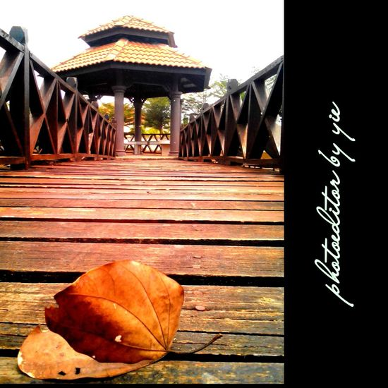 No caption Bokeh Potrait Crop  Kuantan Malaysia Photogrid Relaxing Adjust Colour Taking Photos #myhobby #photographer
