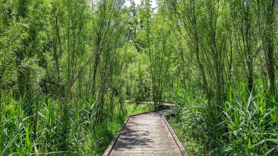 Hidden Gems  Boardwalk Wetlands Coffee Creek Nature Plants Trees Path Swamp