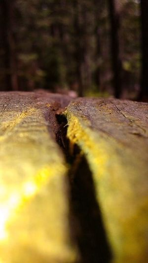 Focus On Foreground Wooden Log Trees Yosemite National Park Landscape_photography Dead Tree EyeEm Nature Lover Paint The Town Yellow