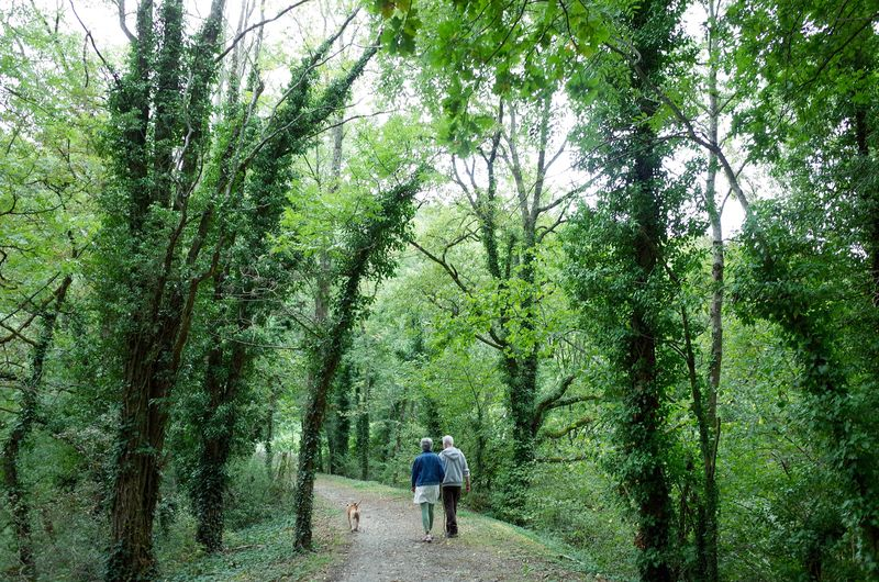 Full length rear view of people with dog walking on footpath in forest