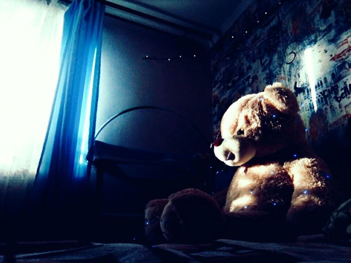 Teddy Bear Indoors  Stuffed Toy Toy Bear Childhood No People Domestic Room Day Close-up Animal Themes Mammal