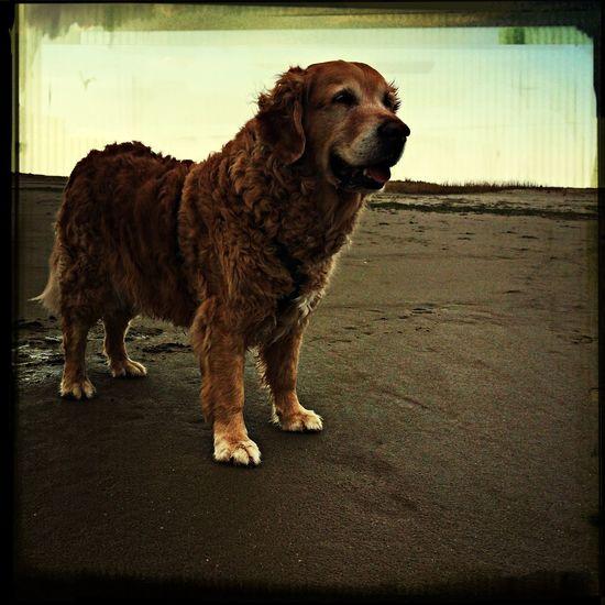 Bruno Dog Dogs