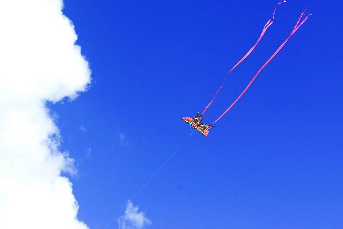 Mauerpark Drachen Drachen Steigen Kite Kites Dragonfly Dragon Hang Gliding Hang Glider Autumn