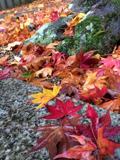 落葉の彩り