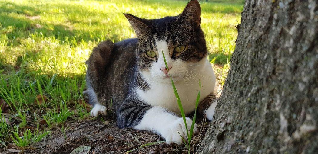 MY tree Tree Cat Cats Of EyeEm. Nature Morning Sun Garden Exploring Hanging Around Pets Field Animal Themes Close-up Grass