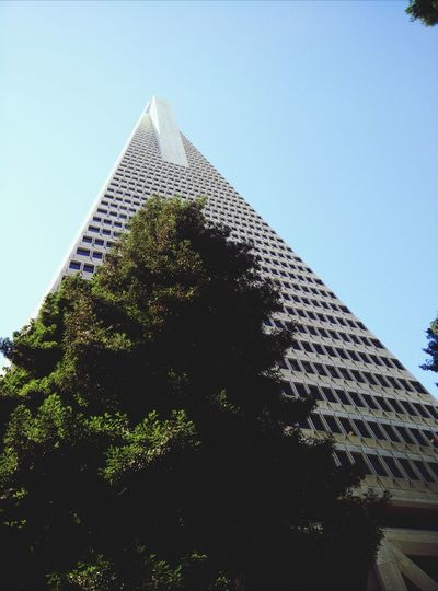 Out for rent California Redwoods Architecture Building Scenery