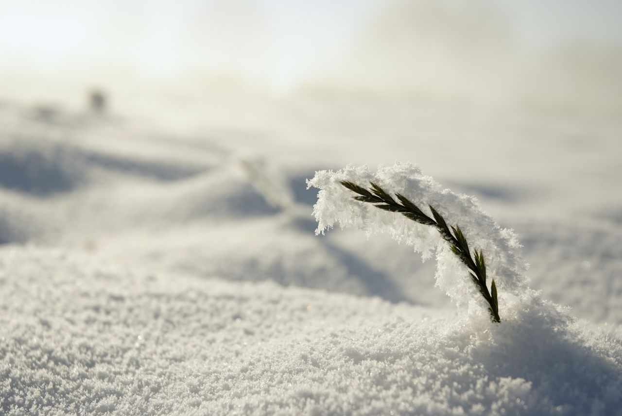 winter, snow, cold temperature, close-up, frozen, ice, nature, day, white color, frost, no people, focus on foreground, selective focus, beauty in nature, plant, tranquility, outdoors, land, covering, powder snow