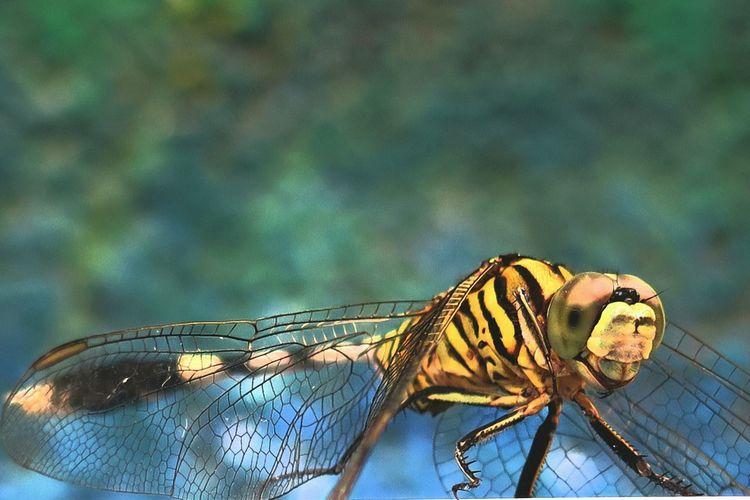 Close-up of dragonfly perching outdoors
