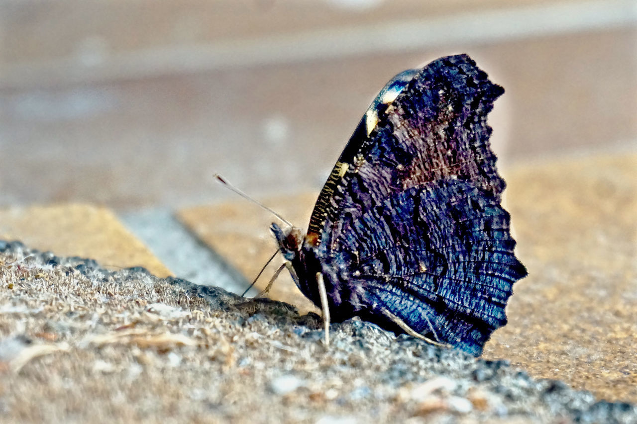 animals in the wild, one animal, animal themes, insect, close-up, no people, day, animal wildlife, outdoors, nature