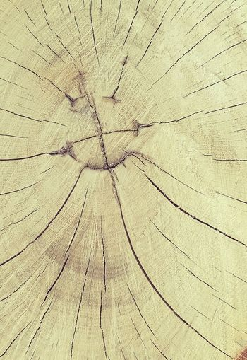 Backgrounds Close-up Textured  Nature Tree Ring Tree