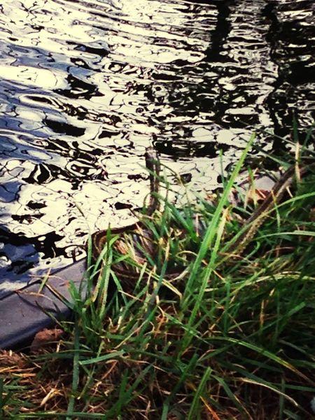 Nature Snake Pond Backyard