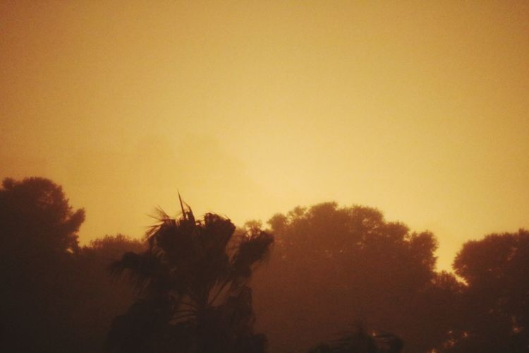 Raining Sky Tree Plant Sunset Beauty In Nature Tranquility Growth Nature Yellow Orange Color Scenics - Nature