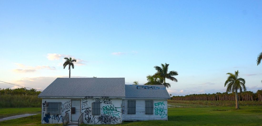 This is a Mad House Blue Architecture Sky Built Structure Day Clear Sky Tree Outdoors Palm Tree Building Exterior No People Nature Animal Themes GraffitiArtWork Graffiti Art Palm Tree