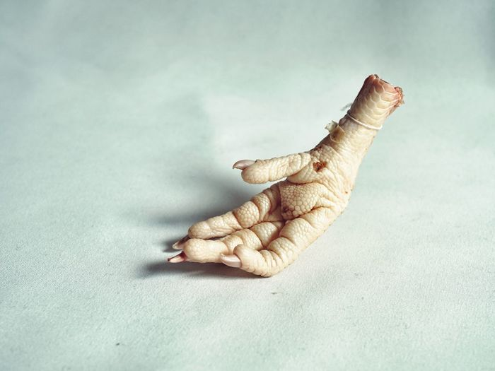 kurczak 02 Foot Claw Bird Foot Skin Texture Chicken Animal Nature Avian Reptilian Hand Fingers Relaxed Recumbent Chicken Foot Minimal Stark Close-up Palm Human Limb Human Hand