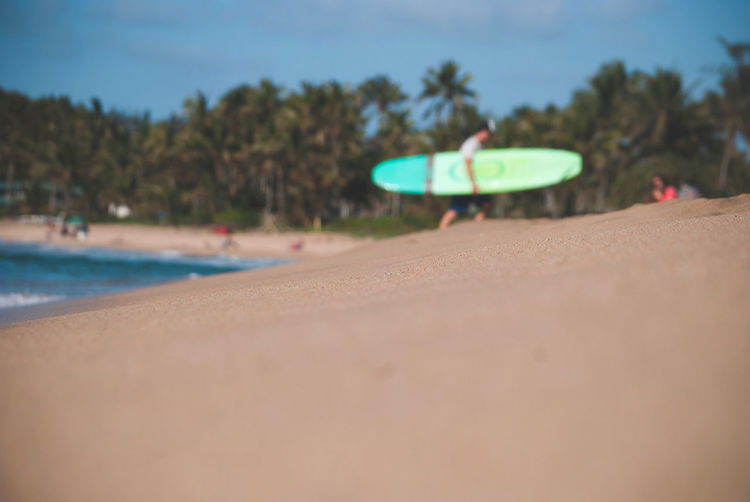 Surf Surfing Travel Travel Destinations Hawaii Land Beach Sand Day Selective Focus Tree Nature Water Outdoors Close-up Green Color Sunlight Sky Surface Level Plant No People Focus On Foreground Sea Transportation