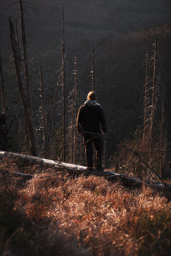 Rear view of man standing on fallen tree trunk in forest