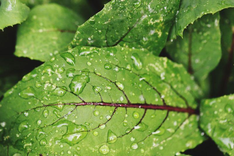 Folha Leaf Drop