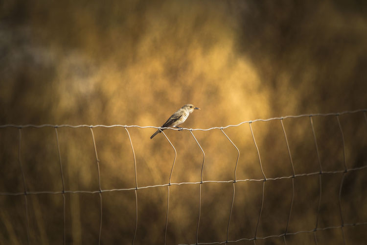 Bird perching on net