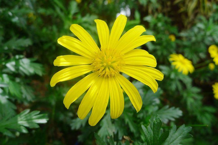 Flower in full