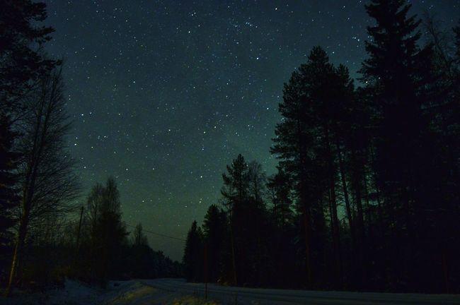 Nightphotography Star - Space Astronomy Night Space Sky Star Field Nightsky Stars Trees Outdoors Hobbyphotography Nikond3200 Starsky Stars