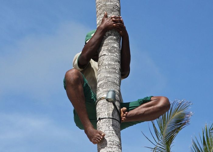Low angle view of man climbing on coconut palm tree against sky