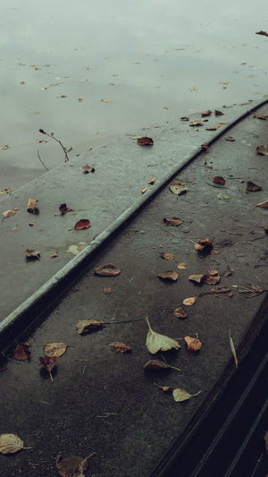 High angle view of dry leaves on wet street