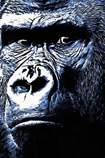Digital Art Full Frame Gorilla, Animal, Primate, Primates, Animal Life, Africa, Zoo, Fascinating, Smart,black, Brown, Silver, Nature,