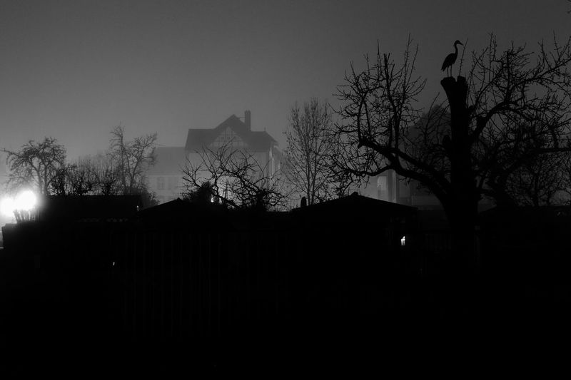 Darkness And Light Night Photography Black & White Monochrome EyeEm Best Shots - Black + White Brandenburg Wildau Nightshot Nightmare Foggy Night